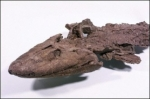 medium_tiktaalik.jpg