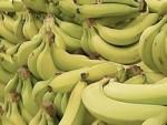 medium_Bananes.jpg