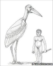 paléontologie cigogne géante Leptoptilos robustus fossile
