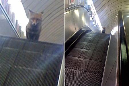 Rencontres dans le metro