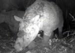 2181463127-une-trentaine-de-cameras-pour-sauver-les-rhinoceros-de-java.jpg