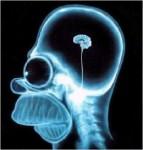 Cerveau Homer.jpg