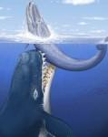 Leviathan6melvillei_0.jpg