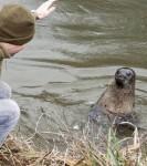 il-n-a-eu-qu-a-claquer-des-doigts-pour-que-l-animal-s-approche-et-sorte-la-tete-de-l-eau_19165_w560.jpg