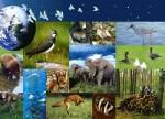 Biodiversite.jpg