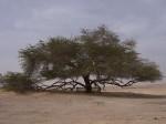 etrange,nature,insolite,arbre,longévité,bahrein,mystère,eau
